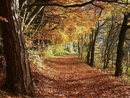 Herbstwald in Deutschland by Martin Heiss at the German language Wikipedia