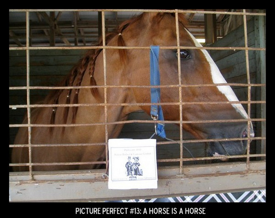 Point values for this target: 3 Points for a picture of a horse; 5 Points for a horse statue or figurine; 7 Points for a live horse.