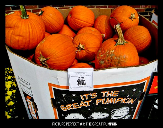 Point values for this target: 3 Points for 3 pumpkins of any type; 5 Points for 3 pumpkins in a patch; 7 Points for 3 carved pumpkins.