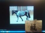 alexander w horse