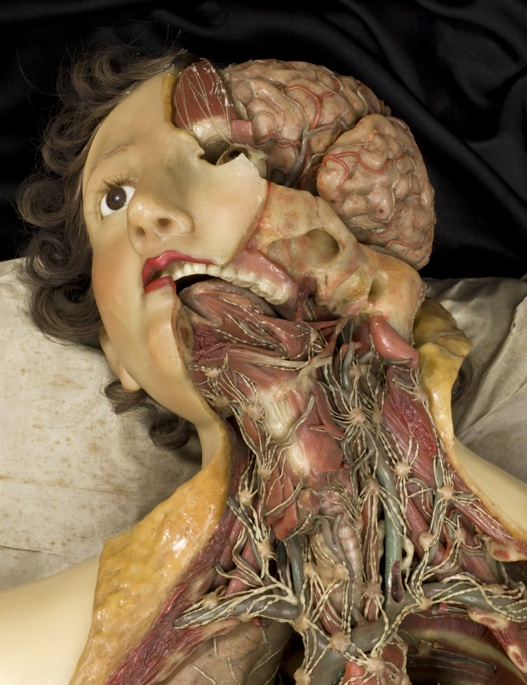Wax anatomical model of a female showing internal organs, Florence, Italy, 1818 via io9