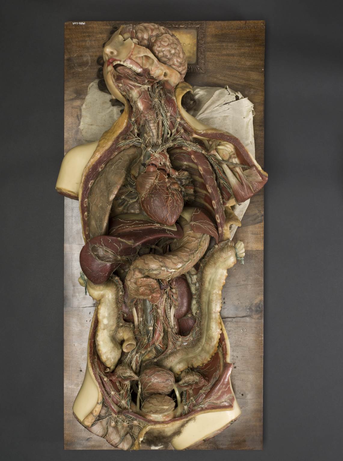 Wax anatomical model of a female showing internal organs, Florence ...