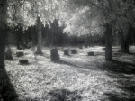 Infrared photo of Bachelors' Grove Cemetery, Chicago by Cobra97. Taken 19 October 2011.