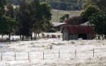 Giant Spiderwebs in Australia Photographed by Daniel Munoz, Reuters, March 2012