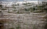 Giant Spiderwebs in Wagga Wagga Australia Photgraphed by Lukas Coch, EPA, March 2012