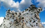 Spider Swarm in Australia Photographed by Daniel Munoz, Reuters, 2012