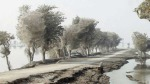 Spider webbed trees in Sindh, Pakistan after 2010 flooding via ShowStudio