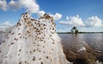 Spiders Swarm after 2012 Australian Flooding Photgraphed by Lukas Coch, EPA