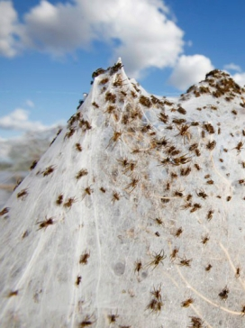 Detail, Spiders Swarm after 2012 Australian Flooding Photgraphed by Lukas Coch, EPA