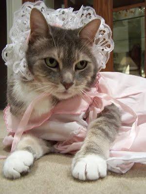 u0027Cat Doll Costumeu0027 & Cat Doll Costume
