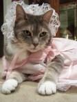 Cat Doll Costume