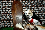 HALLOWEEN_DOGS_LONMED_2783_01