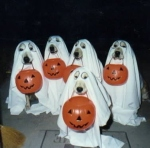 HALLOWEEN_DOGS_LONMED_2783_04
