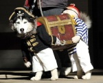 Funny Dog Pirate Costume