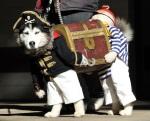 Funny Dog Pirate Costume