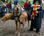 Harry Potter and Cerberus Kids Halloween Costume