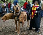 Harry Potter and Cerberus Kids Halloween Costume