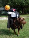 Headless Horseman Halloween Dog
