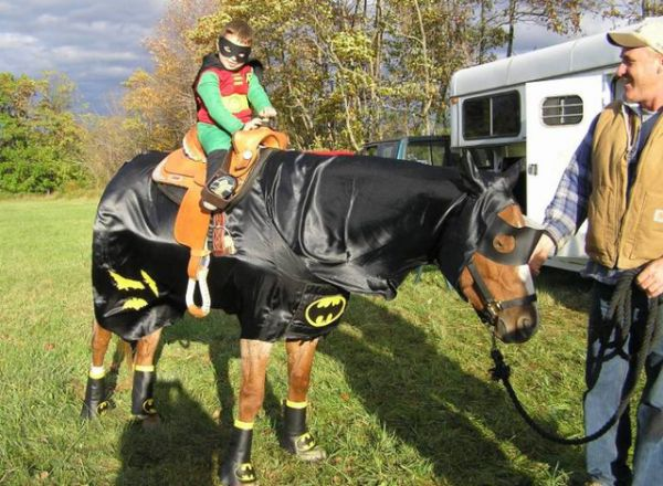 Hilarious Sad Batman Horse - 14 hilarious pictures of sad batman
