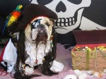 Sea Dog Jack Sparrow Pirate Halloween Costume