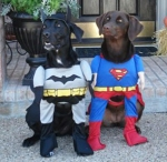 Superhero Dogs Halloween