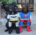 Superhero Dogs Halloween