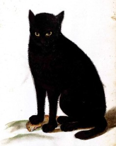 Ulise Aldrovani Animals, Animal - Cat - Black cat - Italian