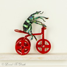 Weevil Riding a Bicycle Shadowbox Diaorama