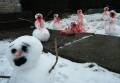 Cannibal Snowmen Inspired by Calvin and Hobbes photographed by EchoHeadache via Uproxx
